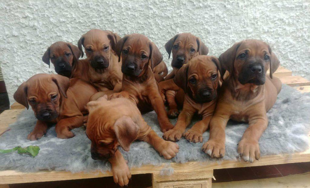 pups may